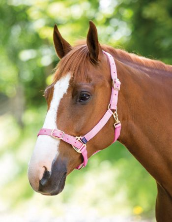 Adjustable headcollar i