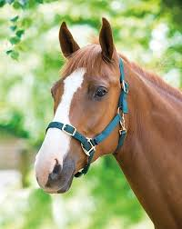 Shires Adjustable headcollar i