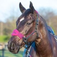 LeMieux Vogue Fleece Headcollar Plum Black