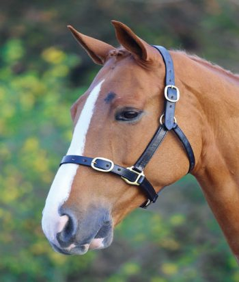 Adjustable leather headcollar black