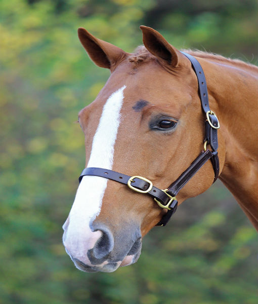 Adjustable leather headcollar havana