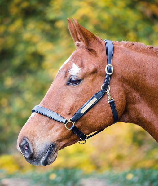 Aviemore Leather Namplate Headcollar