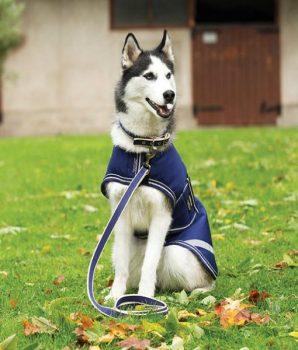 Amigo Dog Lead