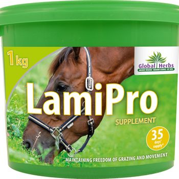Lami Pro