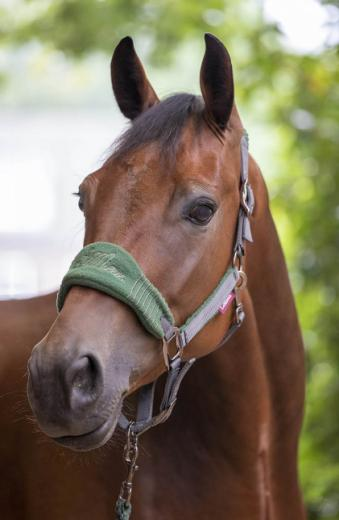 LeMieux Vogue Fleece Headcollar