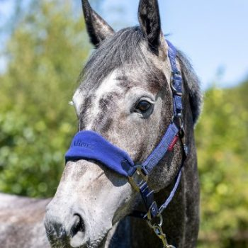 LeMieux Vogue Headcollar Ink Blue